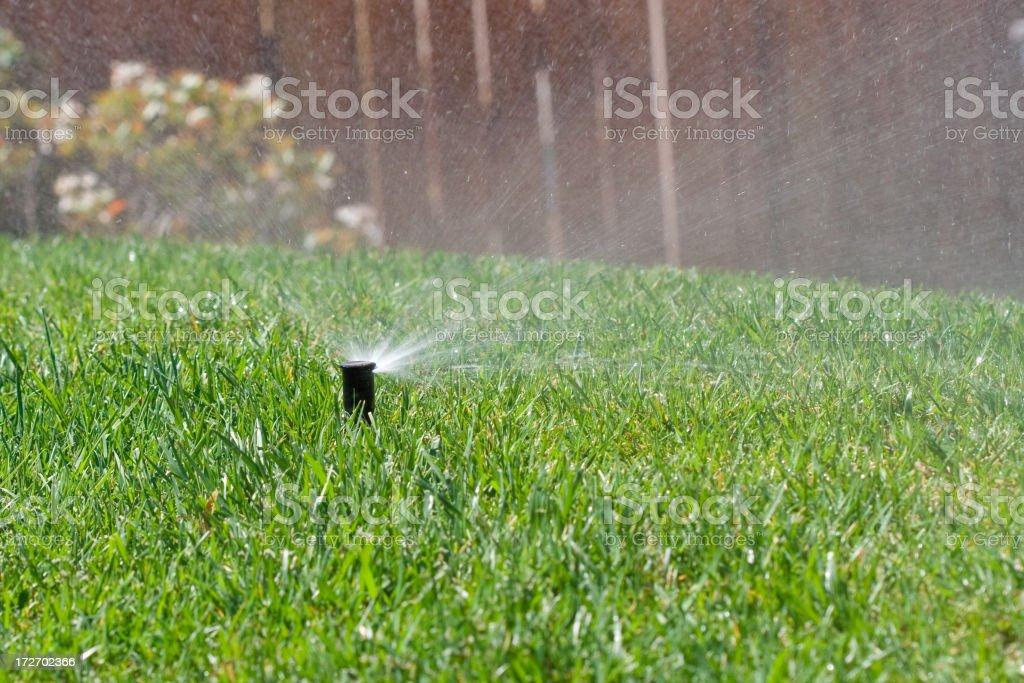 Sprinkler watering the lawn stock photo