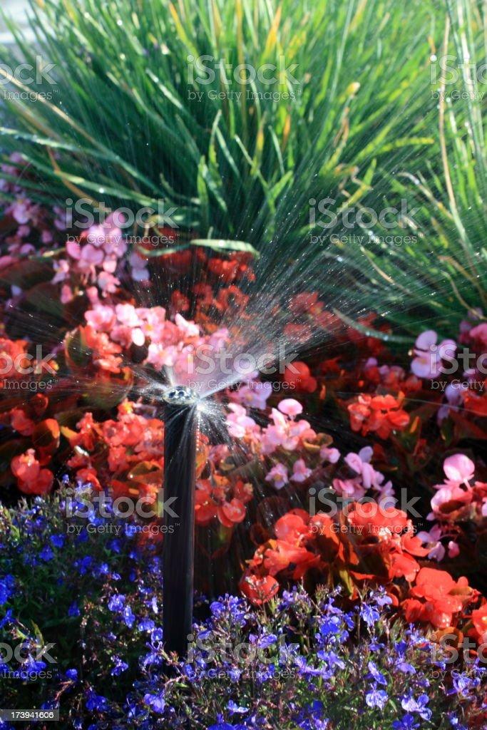 Sprinkler Waters Flowers royalty-free stock photo
