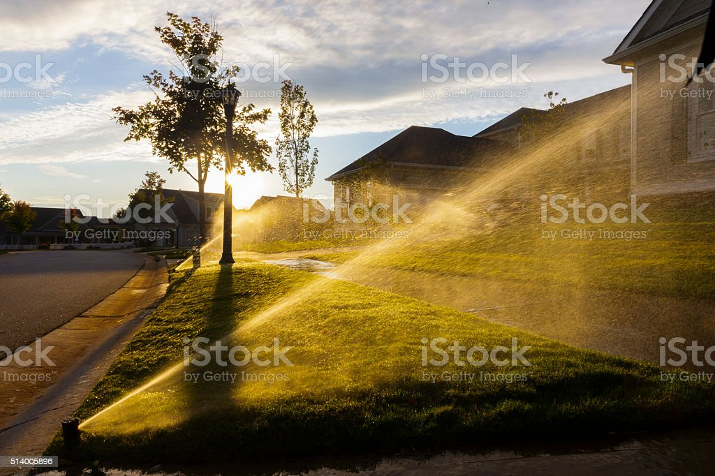 Sprinklers watering grass with sunset. stock photo