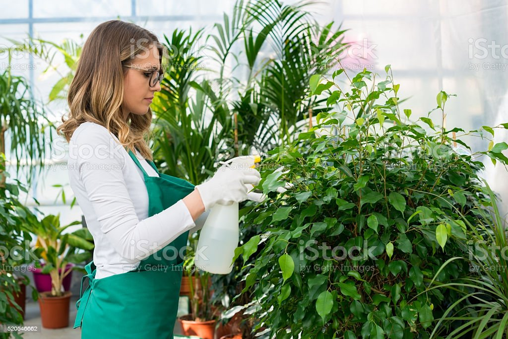 Sprinkling plants with water stock photo