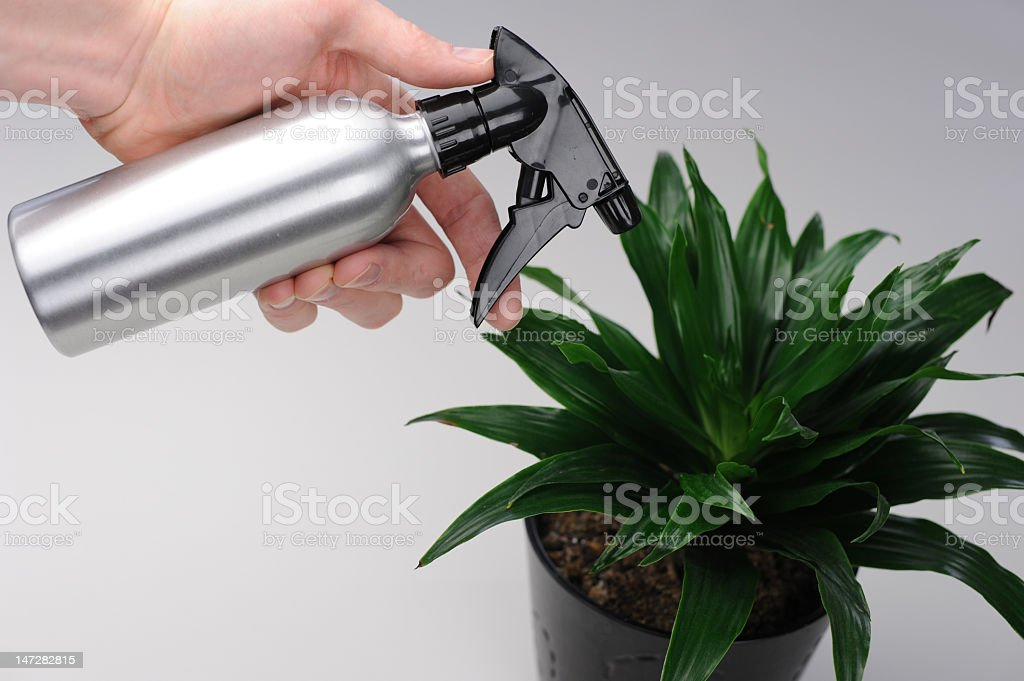 Spritzing a green plant stock photo