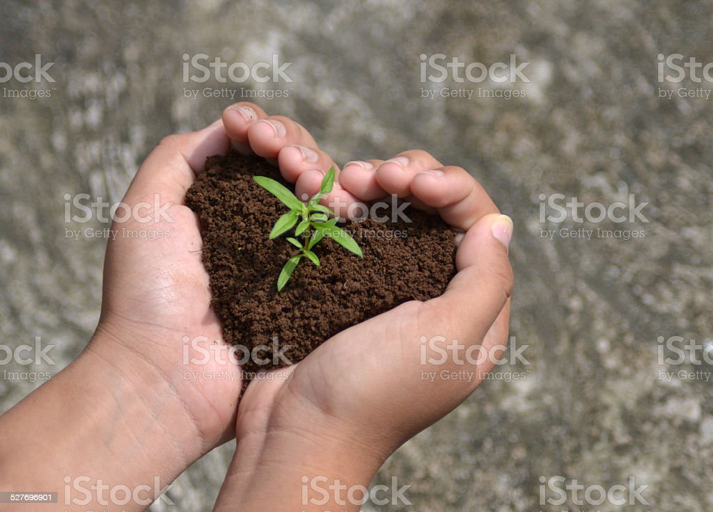 Sprout growing in love stock photo