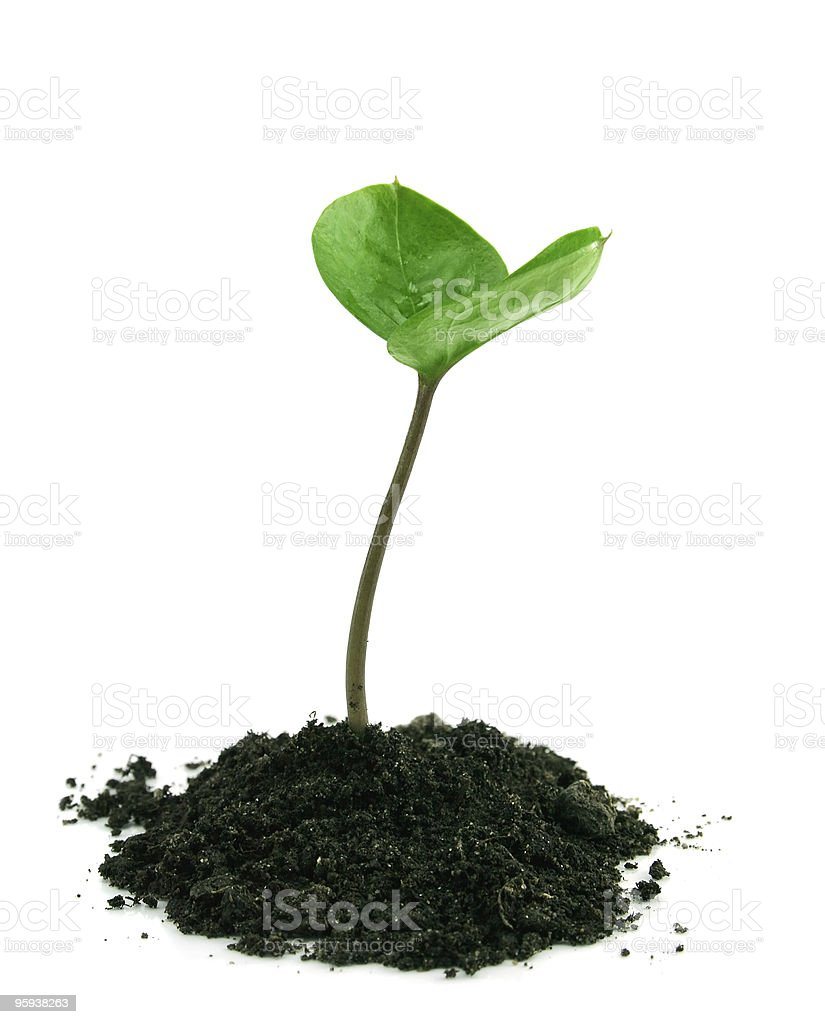 Sprout in a ground isolated royalty-free stock photo