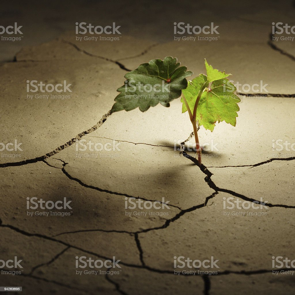 sprout in arid land stock photo