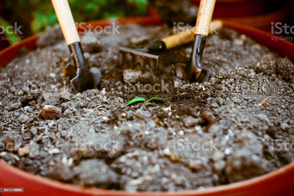 Sprout in the ground alone, around garden accessories. stock photo