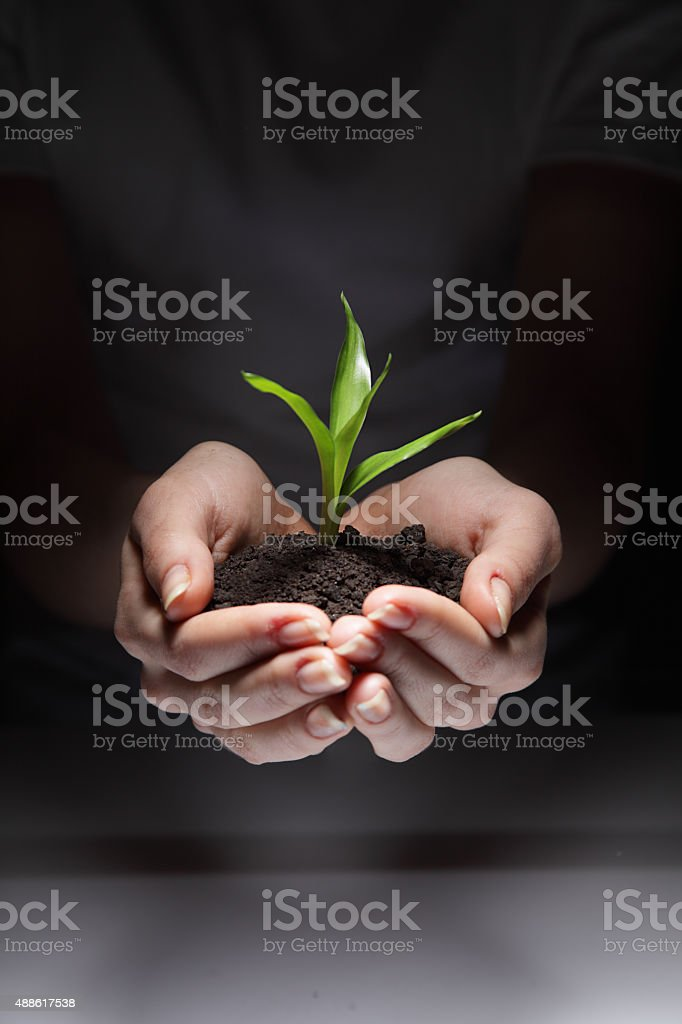 sprout in woman hand stock photo