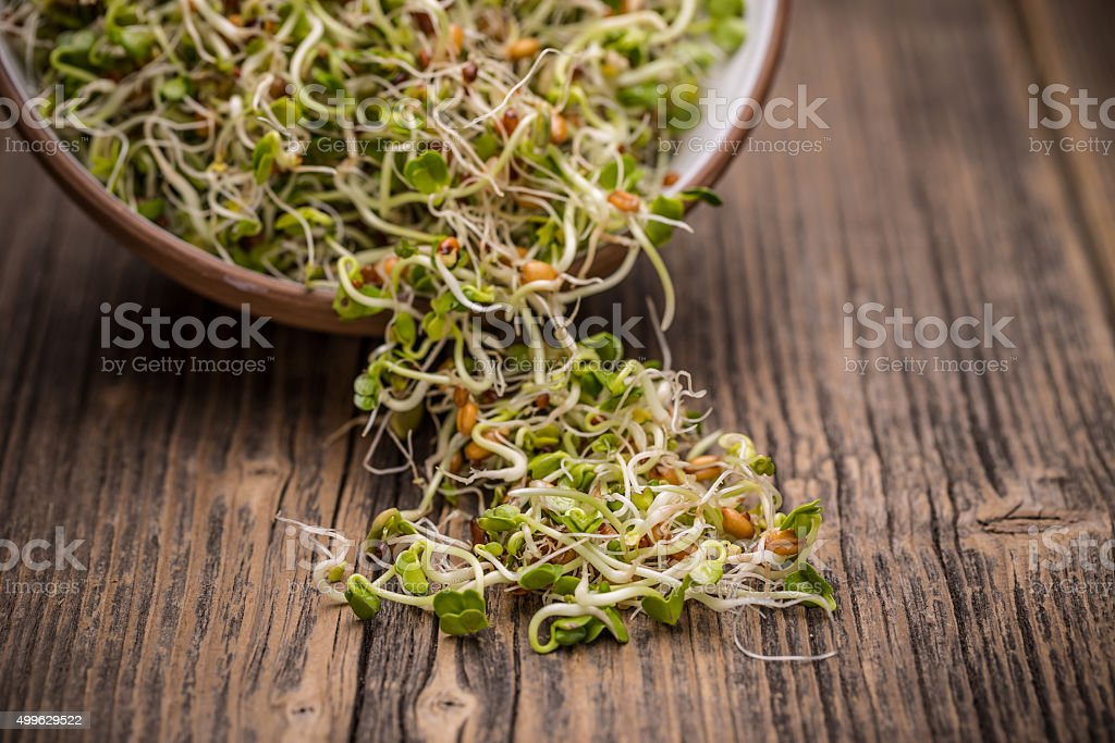 Sprout stock photo