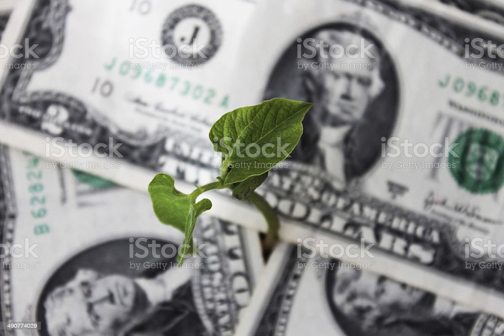 sprout sprouting out of the money royalty-free stock photo