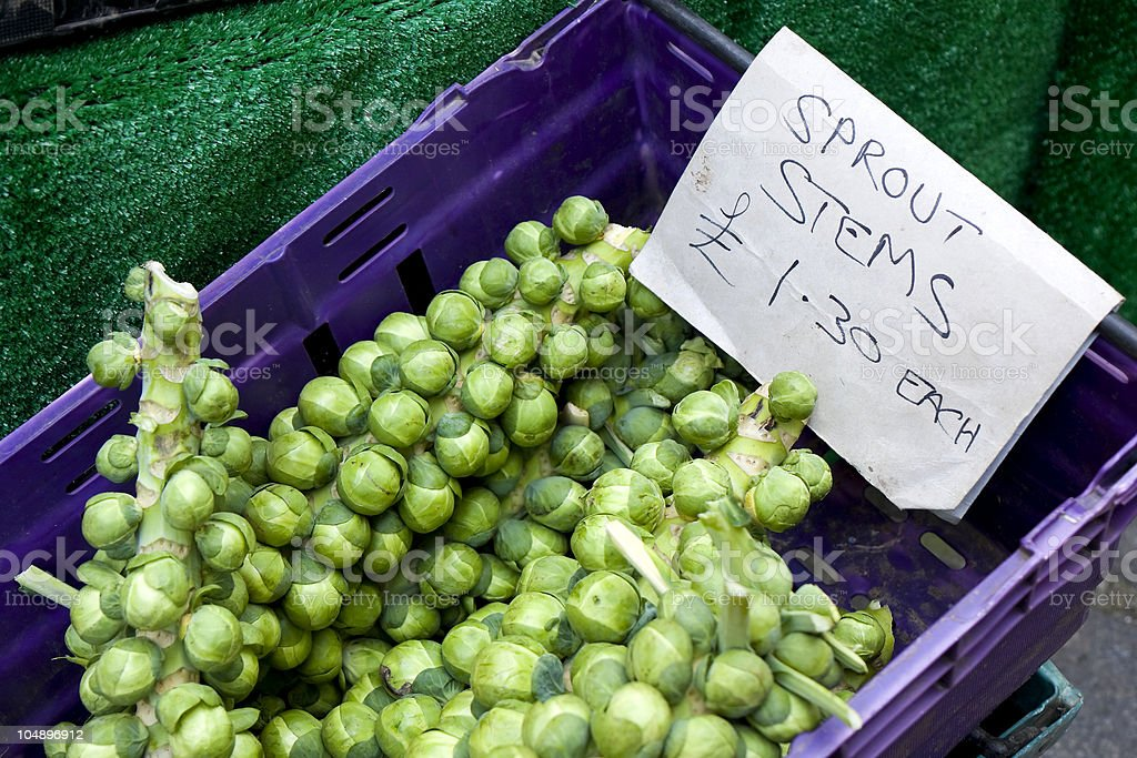 Sprout stems for sale royalty-free stock photo