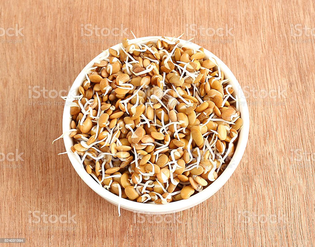 Sprouted Horse Gram stock photo