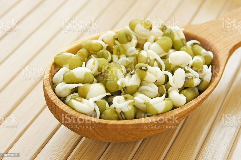 Sprouted mung beans - fresh and healthy royalty-free stock photo