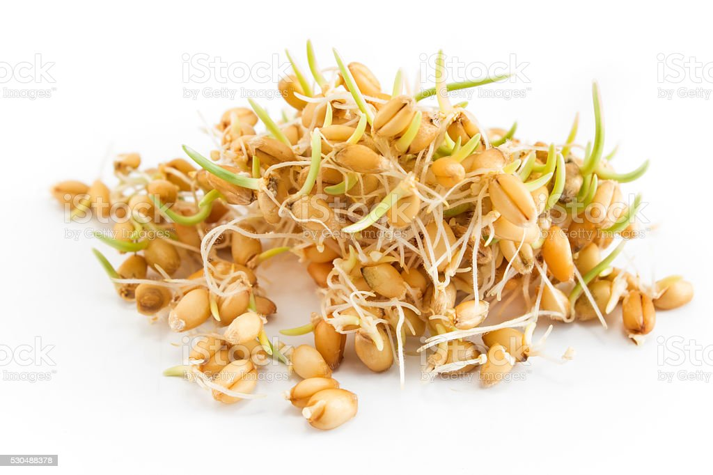 Sprouted wheat on a white background stock photo