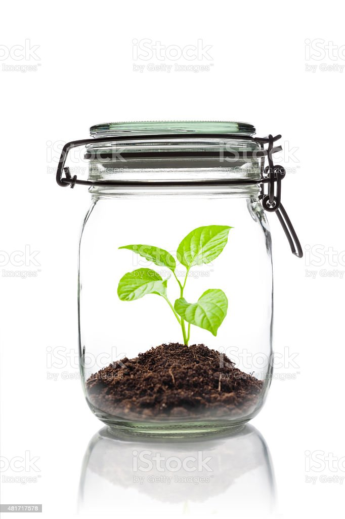sprouting plant in a closed jar stock photo