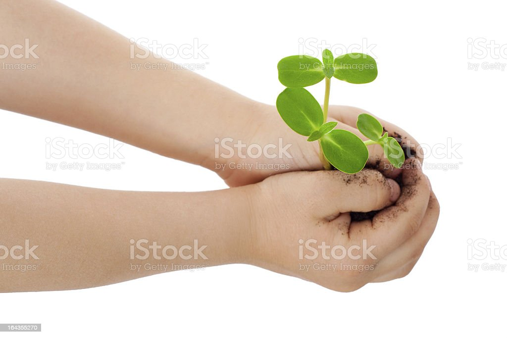 Sprouts in child's hands royalty-free stock photo