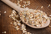 sprouts of buckwheat groats on spoon