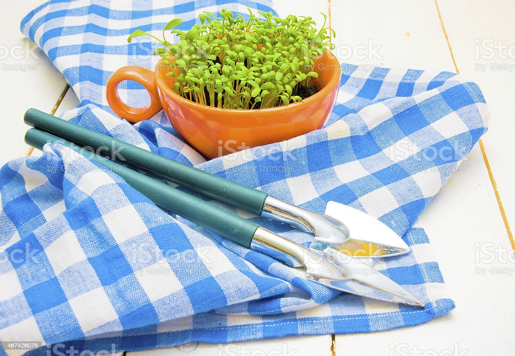 Sprouts of cress and garden shovels on checkered napkin royalty-free stock photo