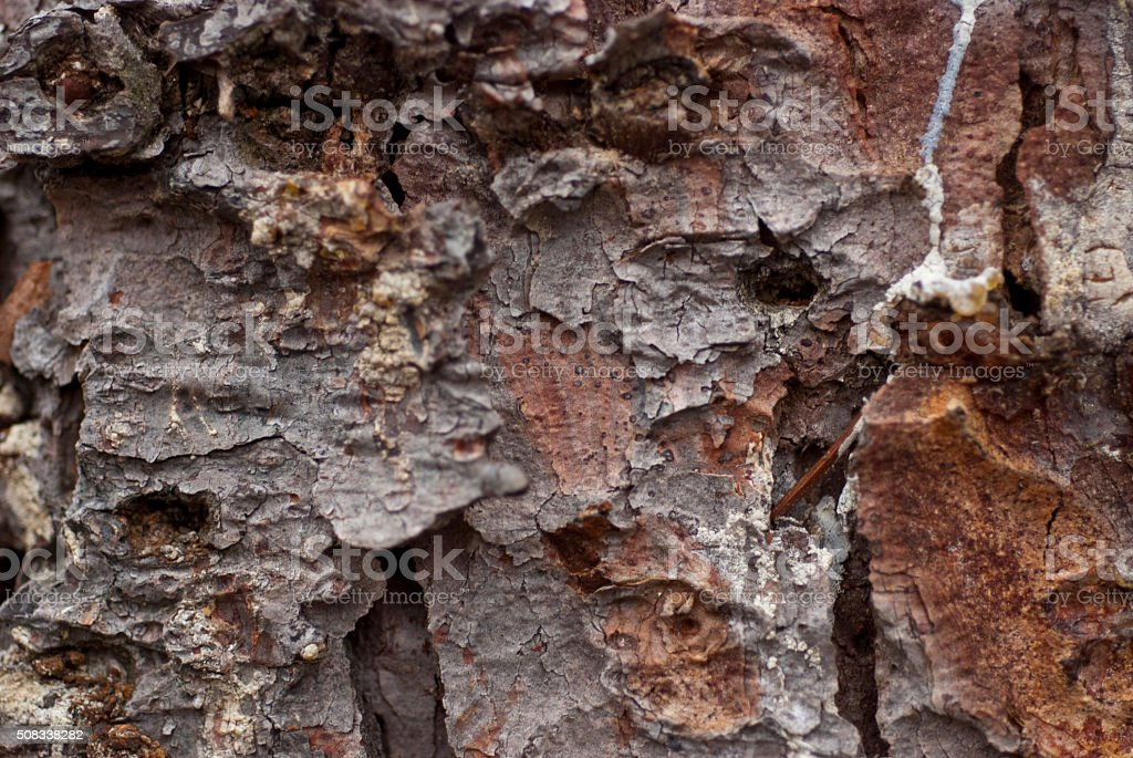 Spruce Bark stock photo