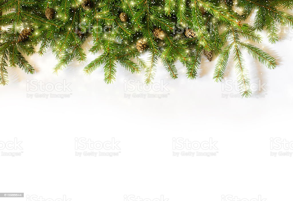 spruce branches on white background stock photo