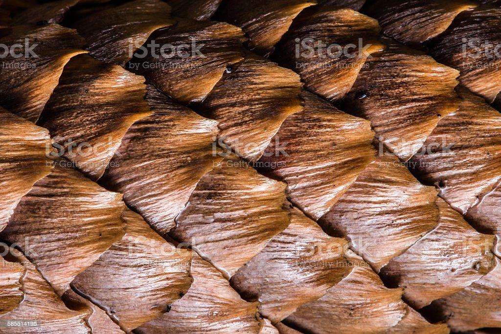 Spruce cone stock photo