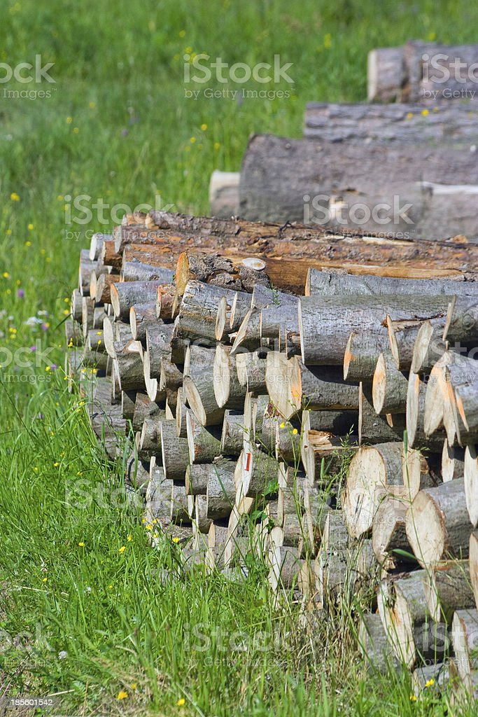 Spruce Timber Logging in Forest, Poland royalty-free stock photo