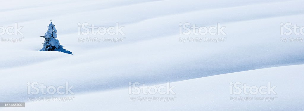 Spruce tree in deep snow royalty-free stock photo