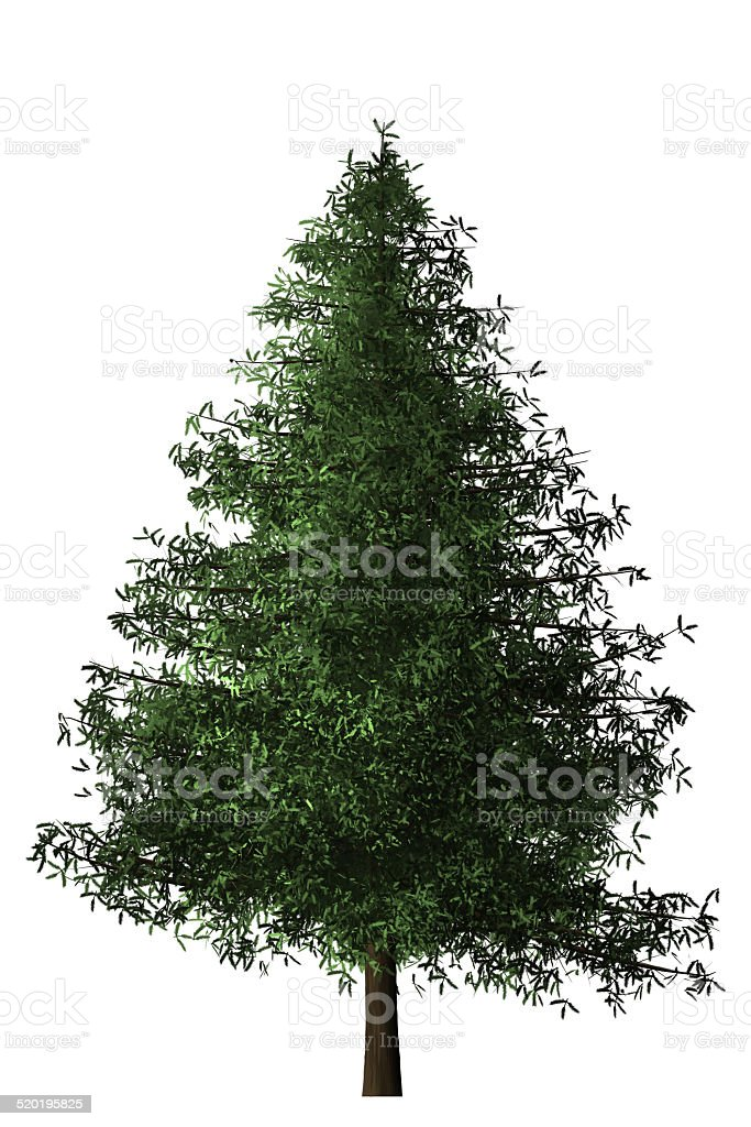 Spruce Tree stock photo