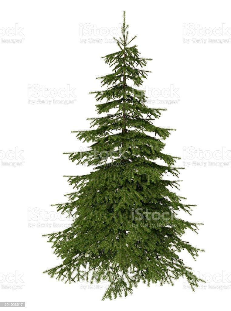 Best Price Christmas Trees