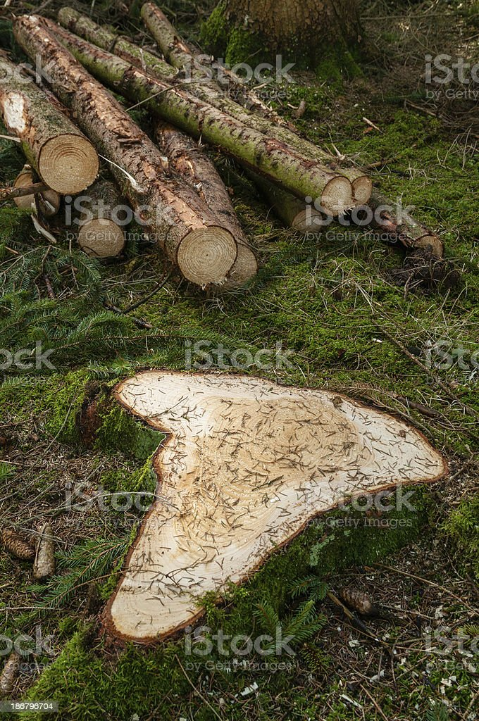 Spruce tree stump. Forestry in Southern Germany royalty-free stock photo