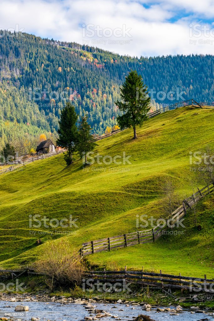 spruce trees on grassy hills in autumn mountains stock photo
