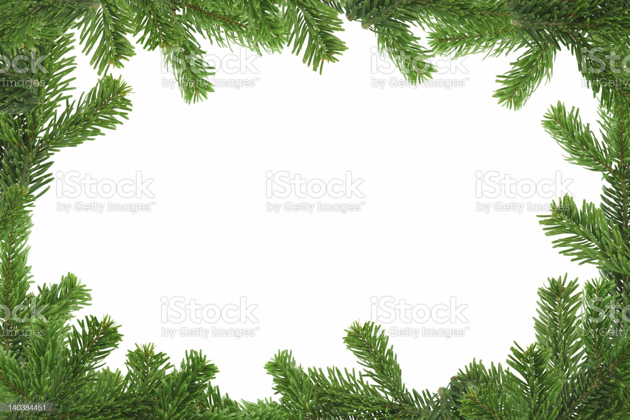 XXL spruce twig frame royalty-free stock photo