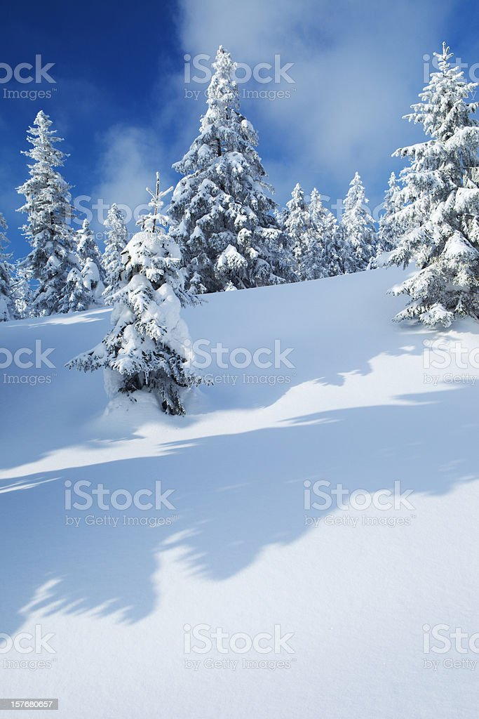 Spruce Winter Forest II royalty-free stock photo