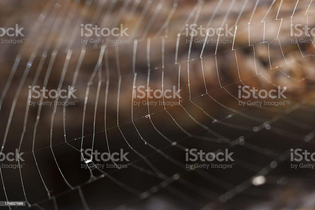 Spyder web royalty-free stock photo