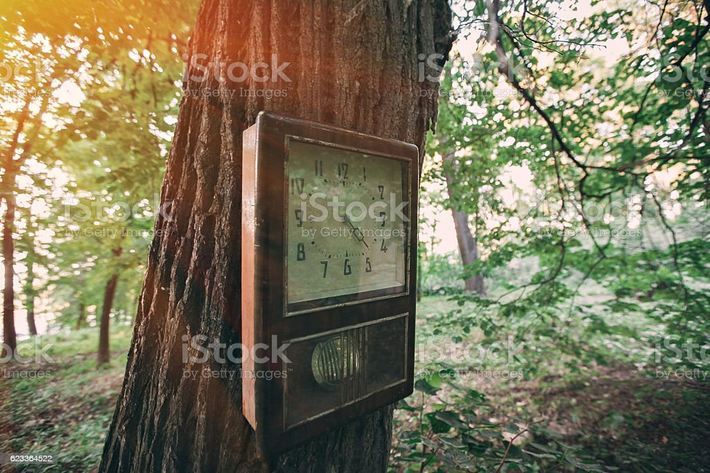 square clock on the tree. forest is magical. Silence  fascinating stock photo