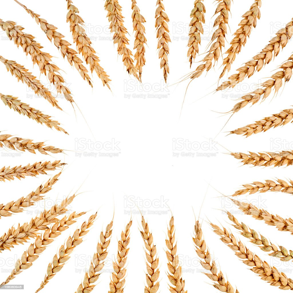 Square frame from ears of wheat royalty-free stock photo
