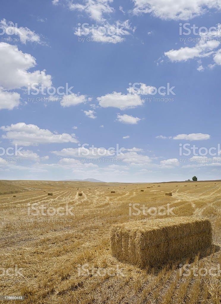 Square Hay Bales royalty-free stock photo