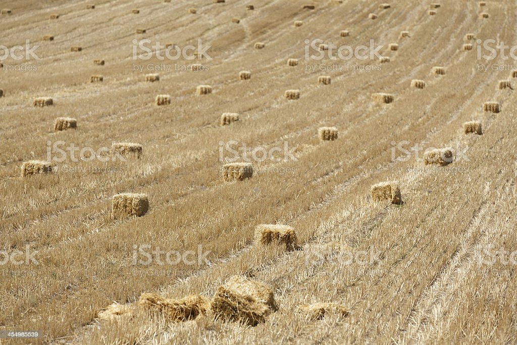 Square hay bales royalty-free stock photo