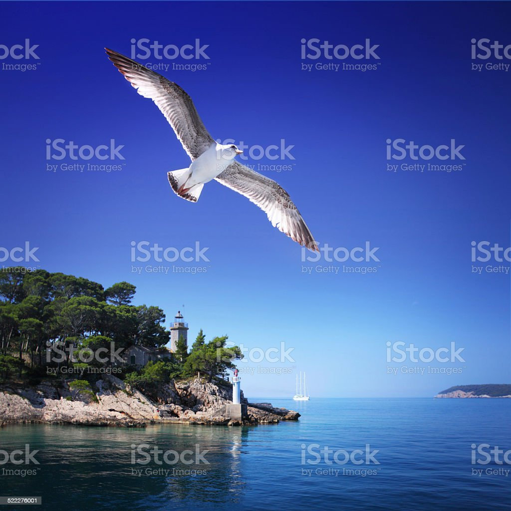 Square landscape with seagull, islands and lighthouse stock photo