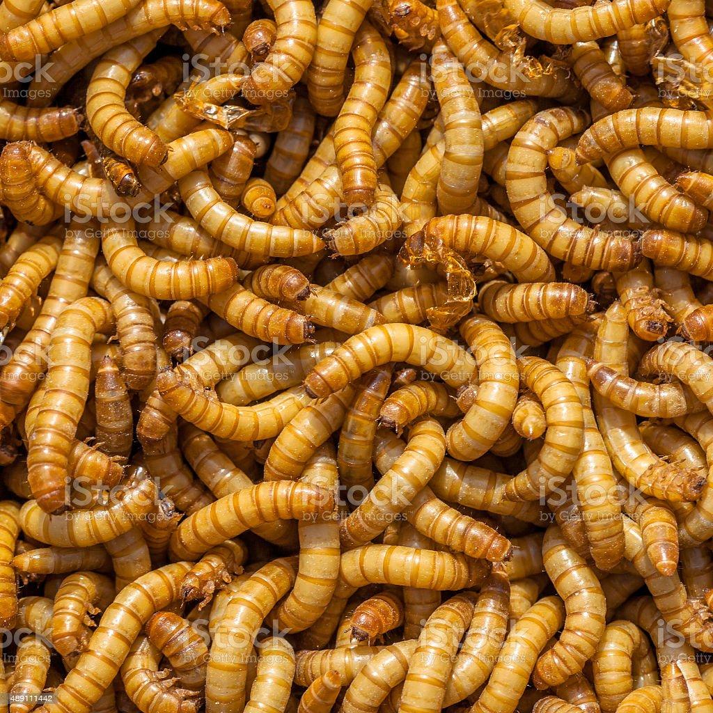 Square Larvae Background stock photo