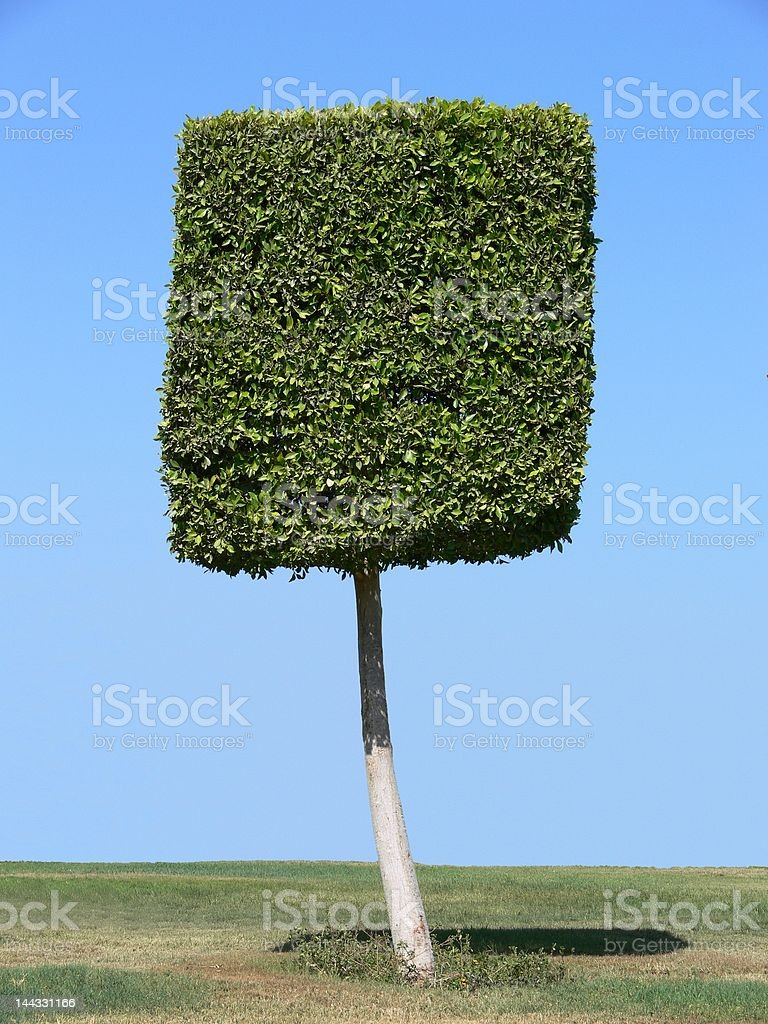 Square shape tree royalty-free stock photo
