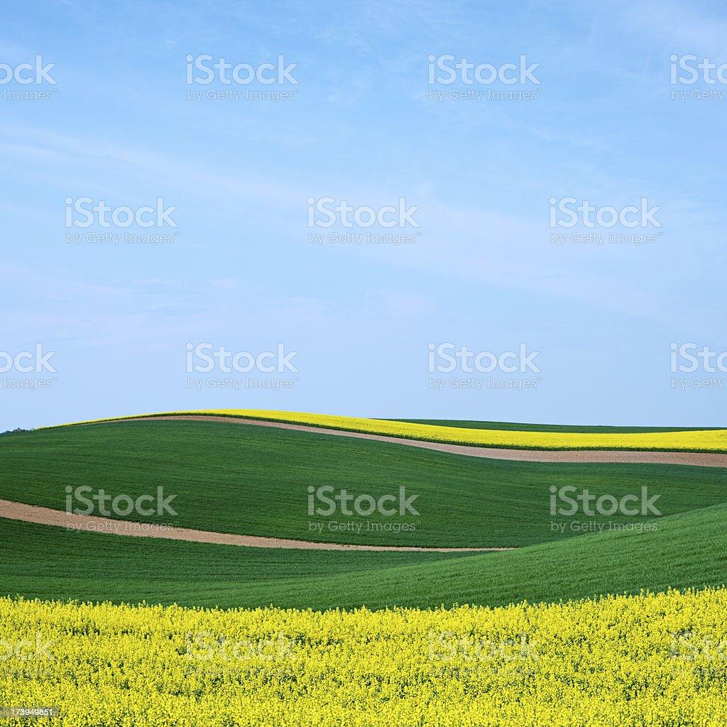 Square spring landscape 22MPix XXXL - meadow, blue sky royalty-free stock photo