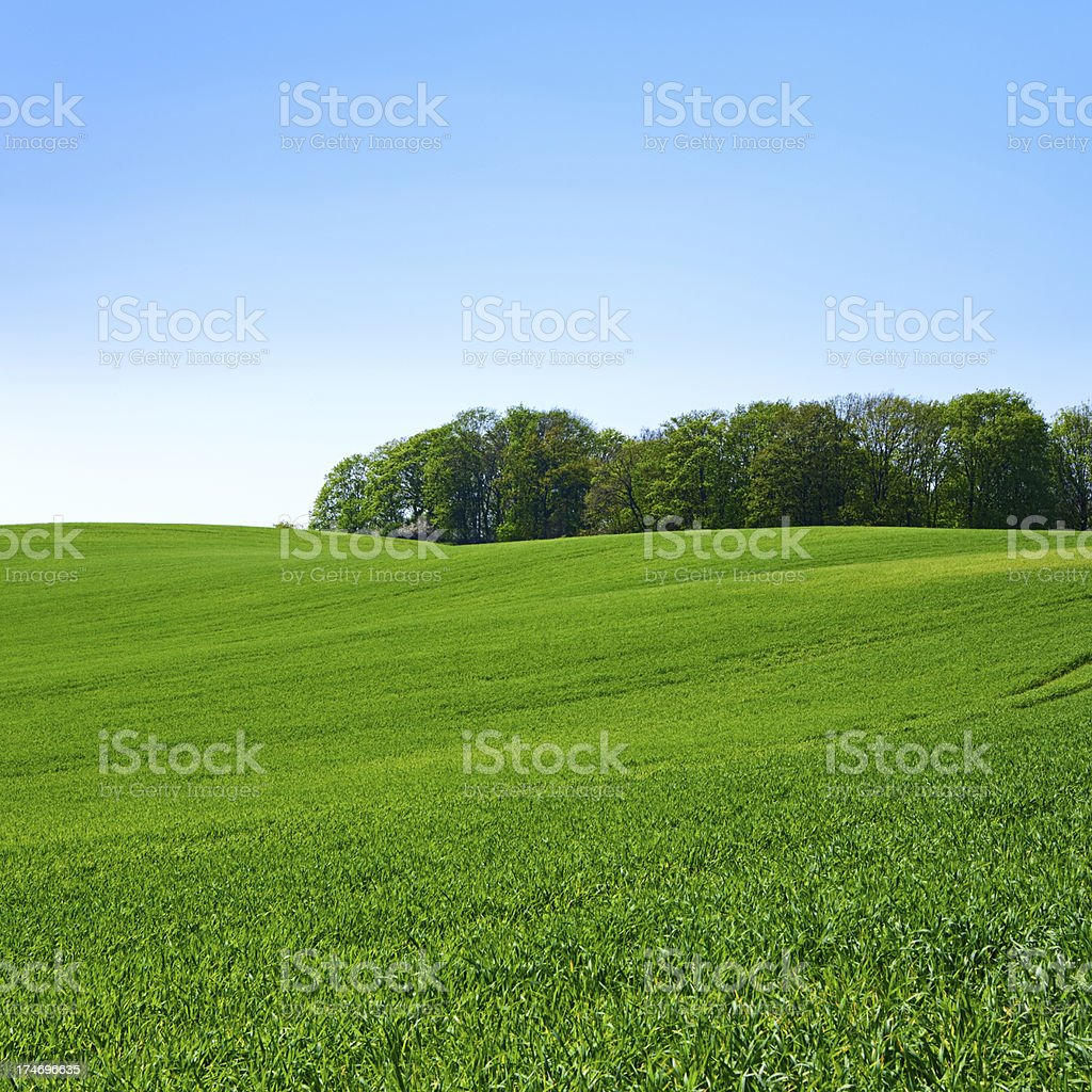 Square spring landscape 23MPix XXXL - meadow, blue sky royalty-free stock photo