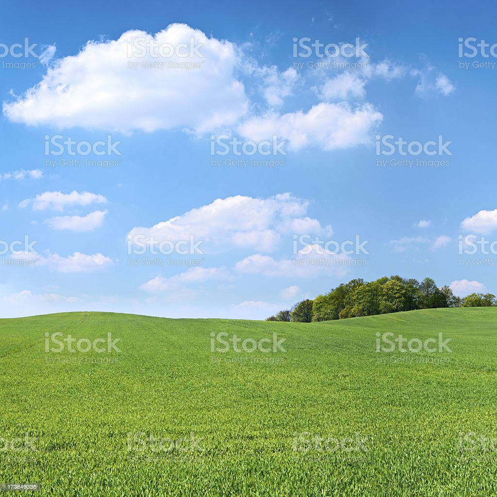 Square spring landscape 25MPix XXXL - meadow, blue sky royalty-free stock photo