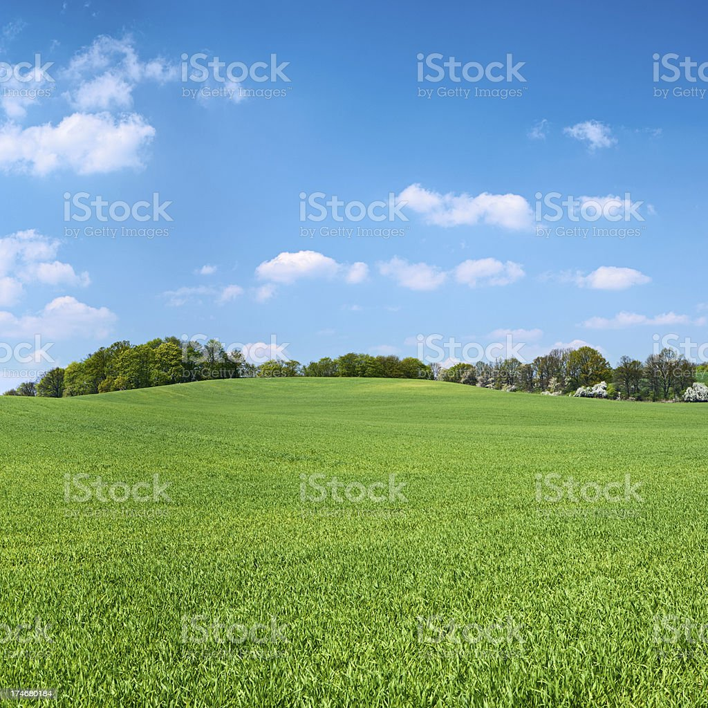 Square spring landscape 30MPix XXXXL - meadow, blue sky stock photo