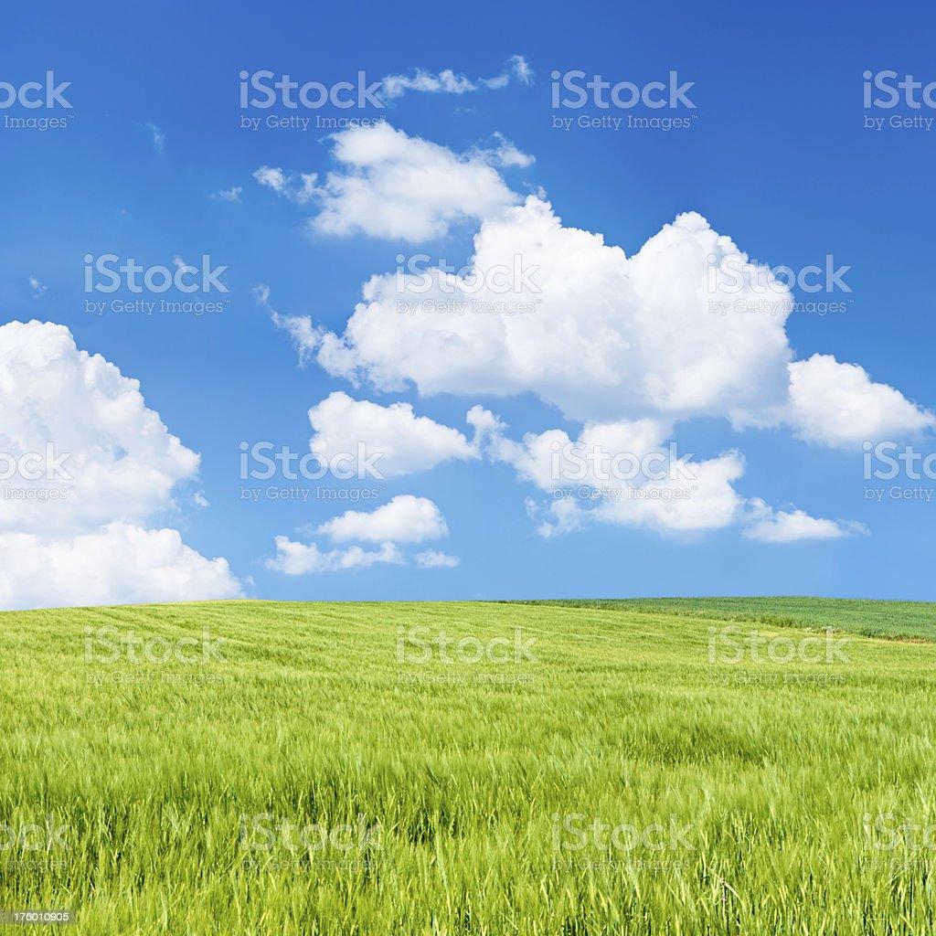 Square spring landscape 35MPix XXXXL - meadow, blue sky royalty-free stock photo