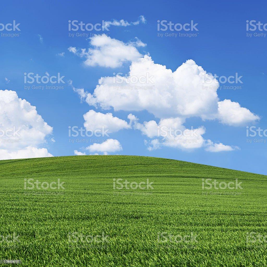 Square spring landscape 36 MPix XXXXL - meadow, blue sky royalty-free stock photo