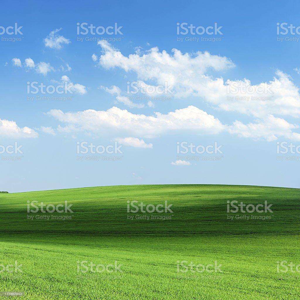 Square spring landscape 36MPix XXXXL- meadow, blue sky royalty-free stock photo