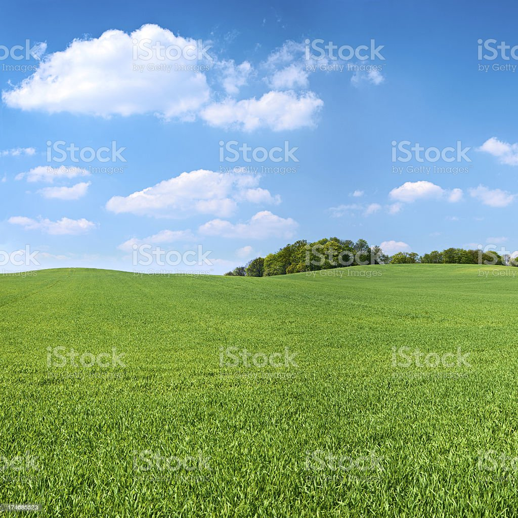 Square spring landscape 38MPix XXXXL - meadow, blue sky royalty-free stock photo