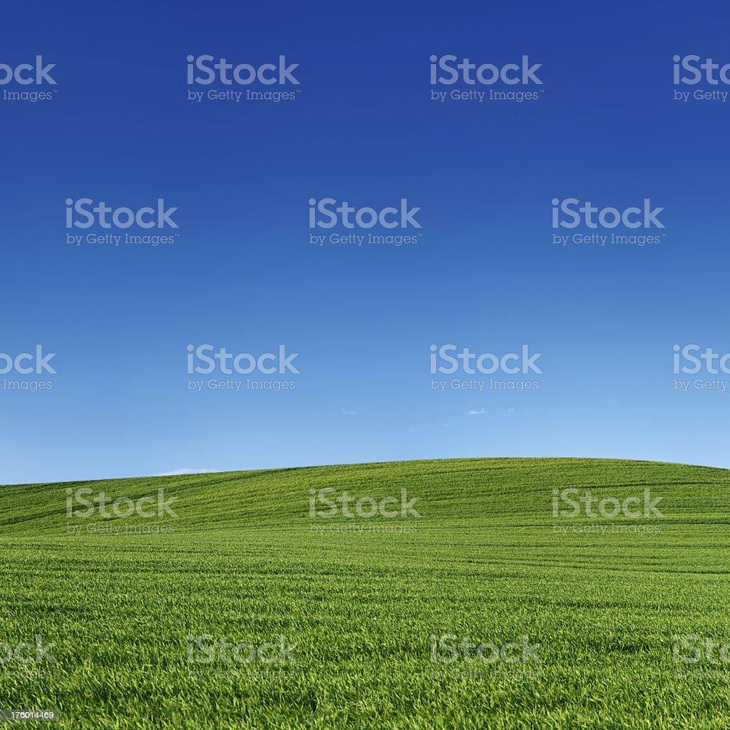 Square spring landscape 39MPix XXXXL - meadow, blue sky royalty-free stock photo