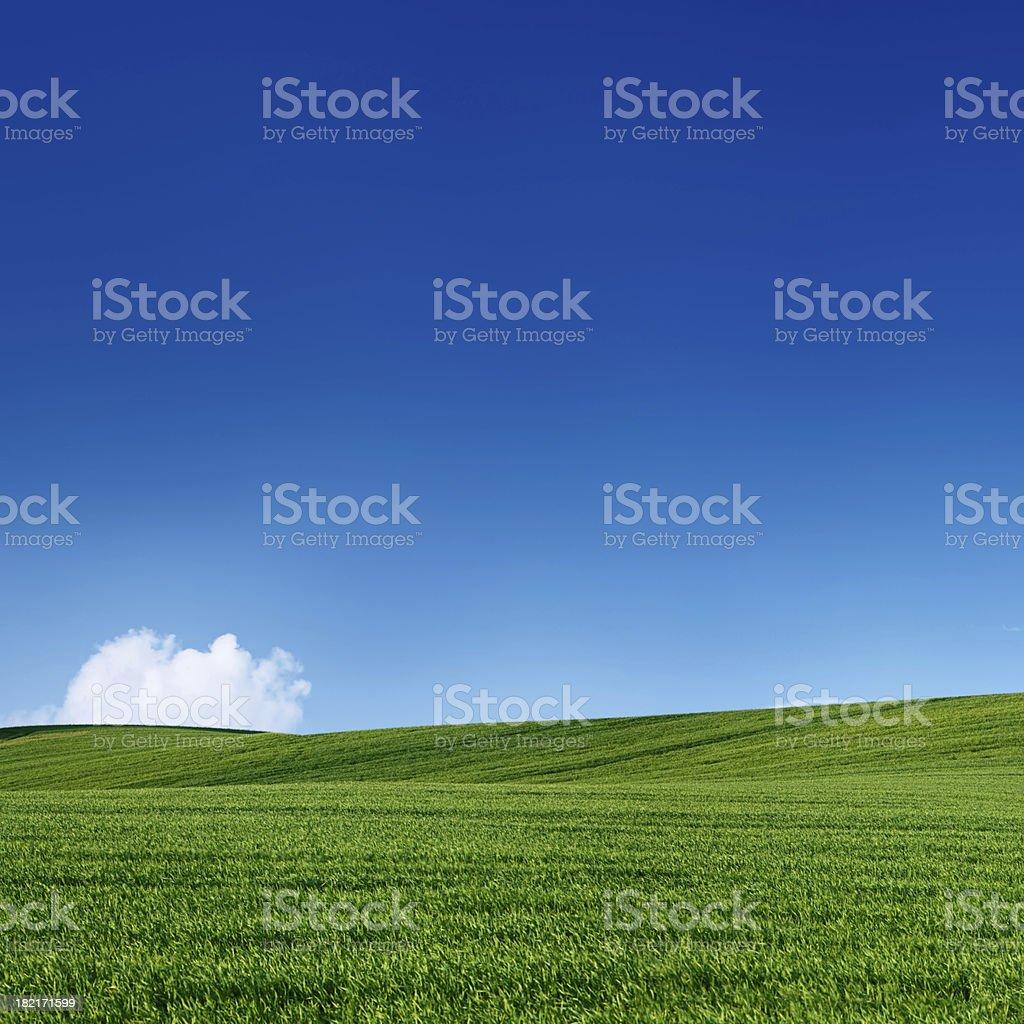 Square spring landscape 50MPix XXXXL - meadow, blue sky royalty-free stock photo