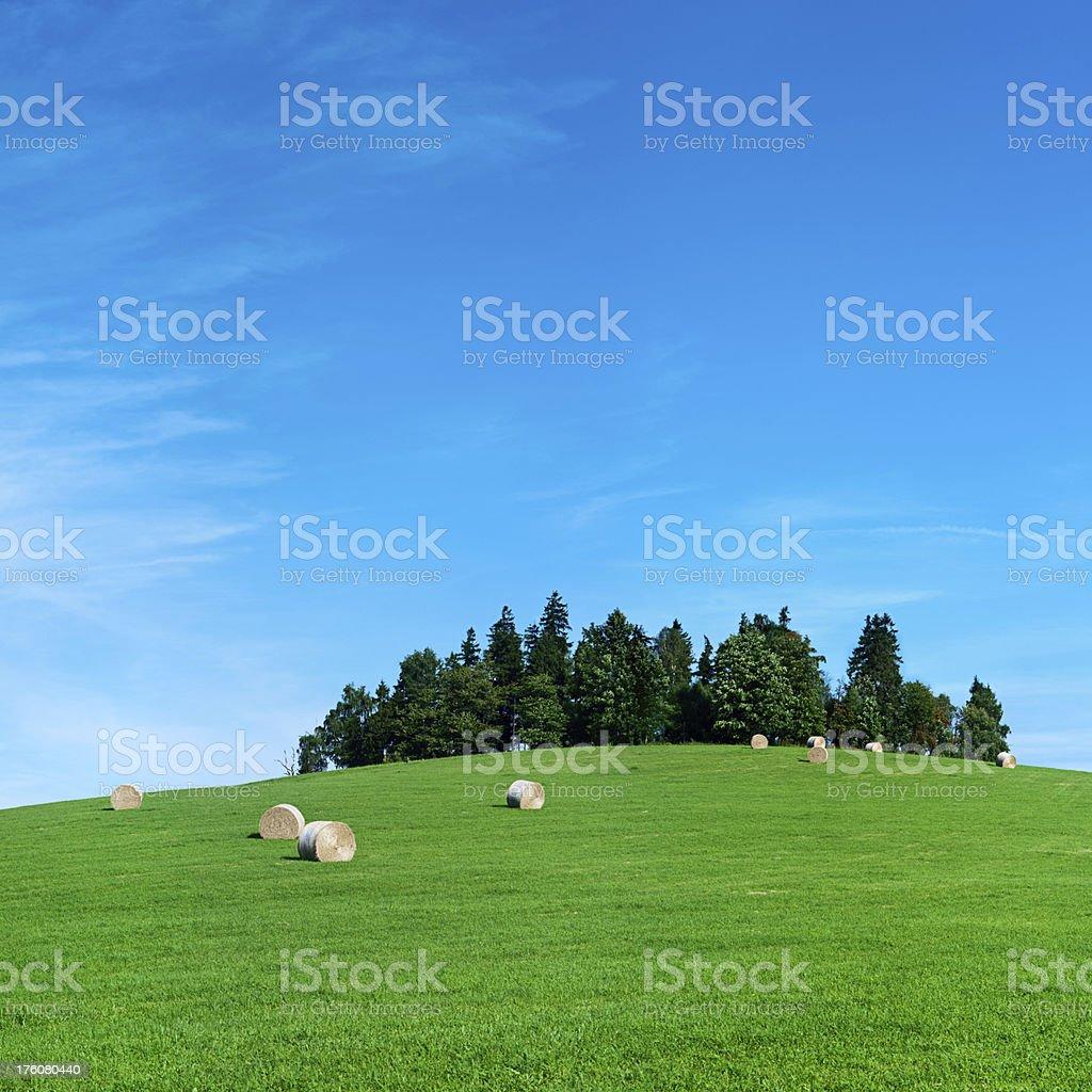 Square spring landscape 52MPix XXXXL - meadow, blue sky royalty-free stock photo